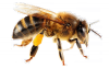 International beekeeping exhibition and mead show coming to Brno Exhibition Centre in May 2019